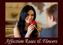 Affection Roses